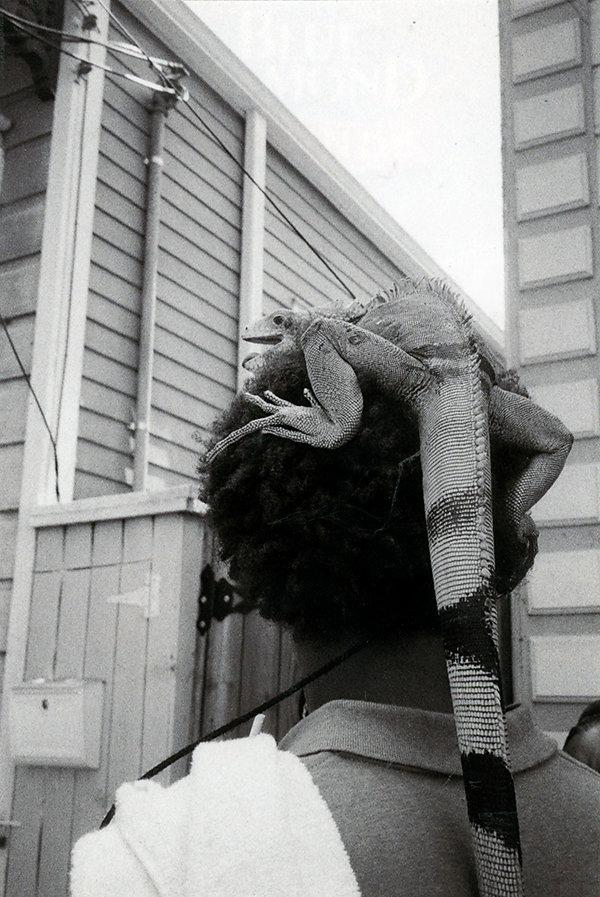 iguana-head4site.jpg